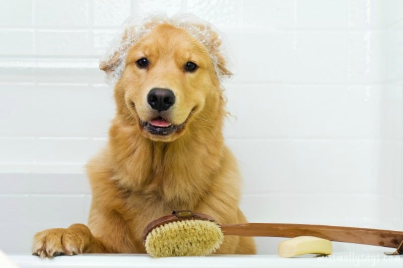 Reasons Dog Grooming is Important