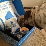 Petbox-monthly-subscription-box-Sept-Molly