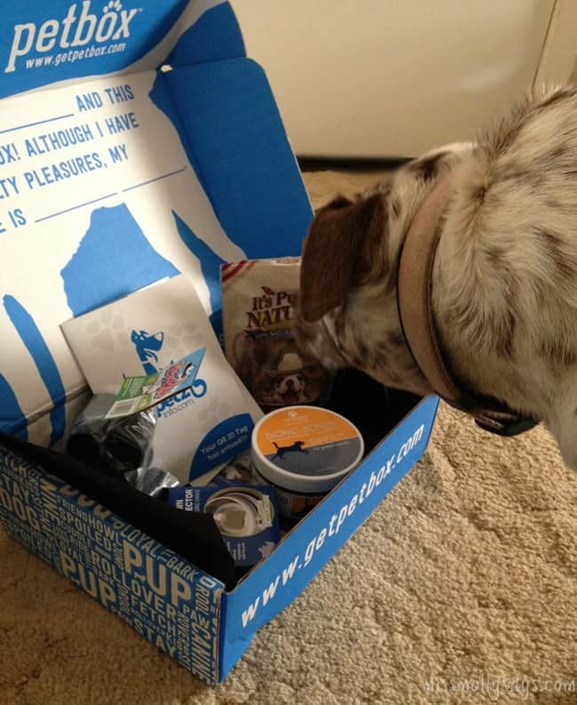 September PetBox had Yummy Treats & Other Goodies!