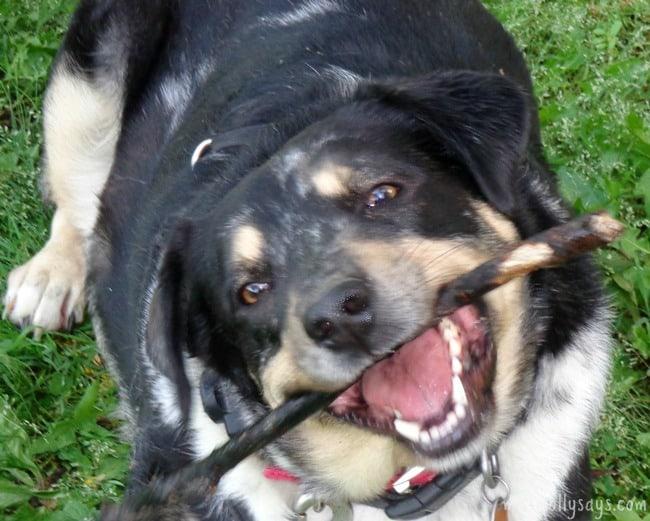 Pet-Dental-Routine-for-Clean-Teeth-and-Fresh-Breath:-#SmoochUrPooch