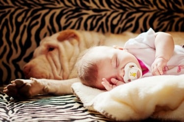 Tips-for-Introducing-your-Dog-to-the-new-Baby