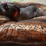 Baylee-Nasco-Pet-Bed