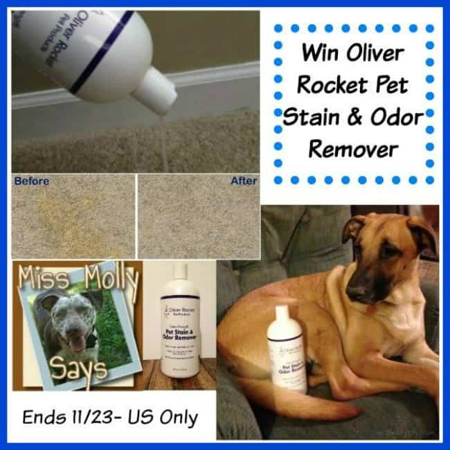 Oliver-Rocket-Pet Stain-and-Odor-Remover-giveaway-button