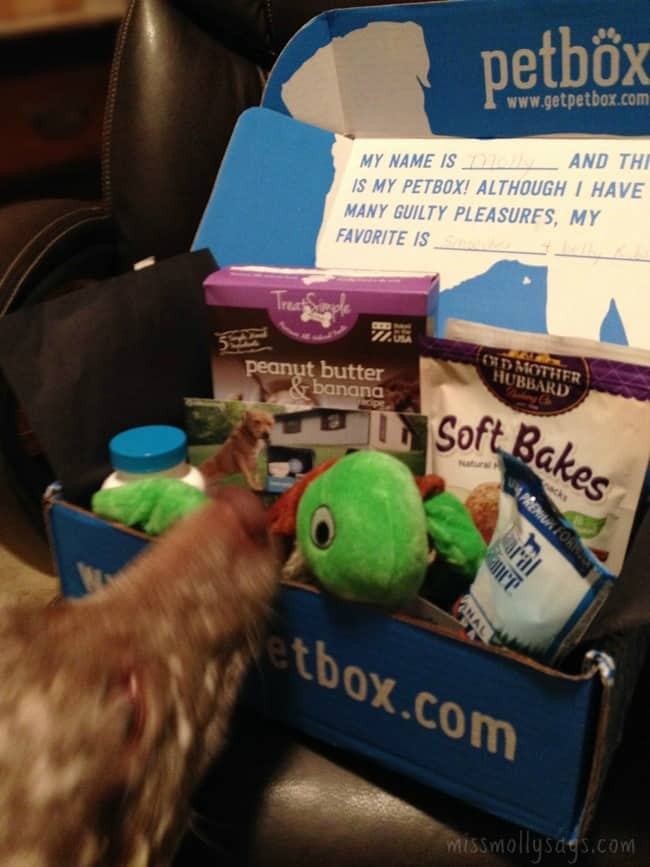 October PetBox was Loaded with Treats, Toys, Joint Health Formula & More!