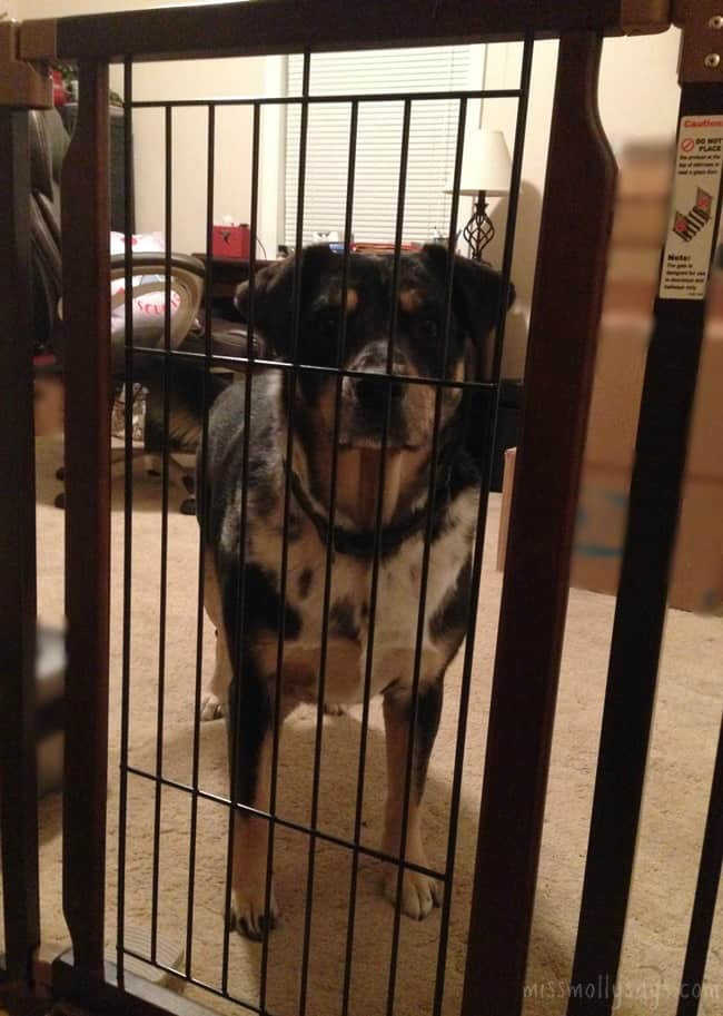 Richell-Hands-Free-Pet-Gate-Seager