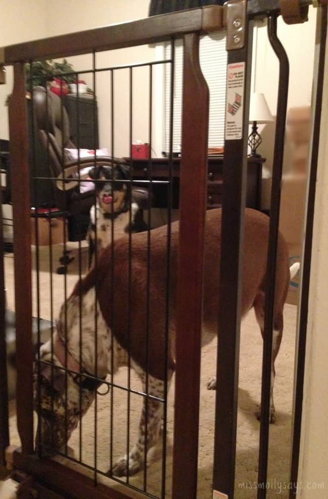 Richell-Hands-Free-Pet-Gate-foot-pedal-Molly