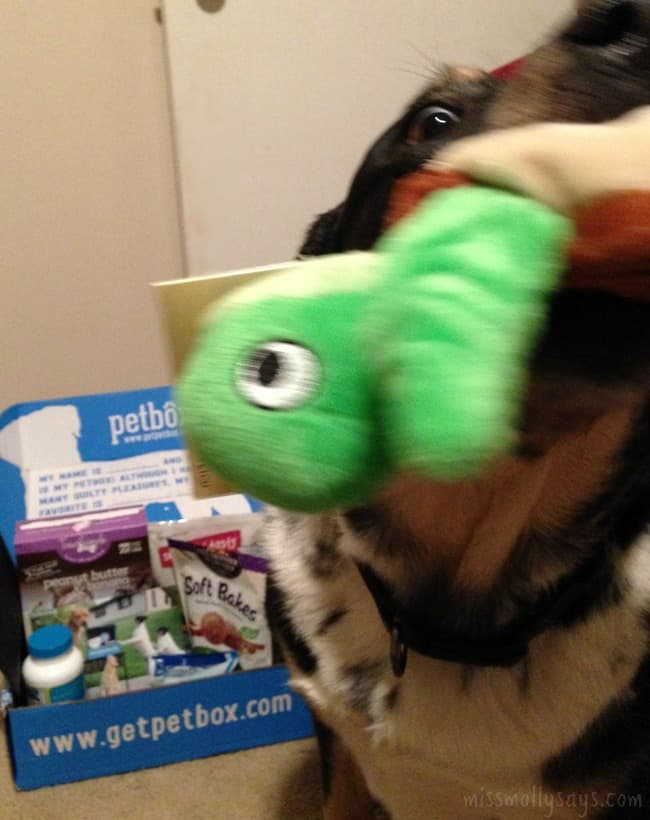 Seager-Hatchables-PetBox