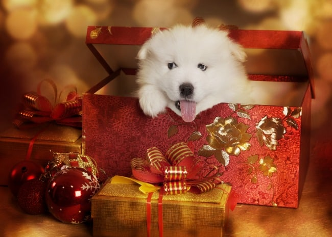 5 Things to Consider Before Getting a Pet for Christmas