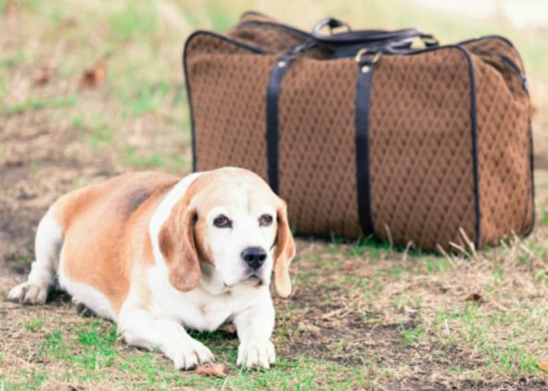 Holiday Pet Boarding Tips