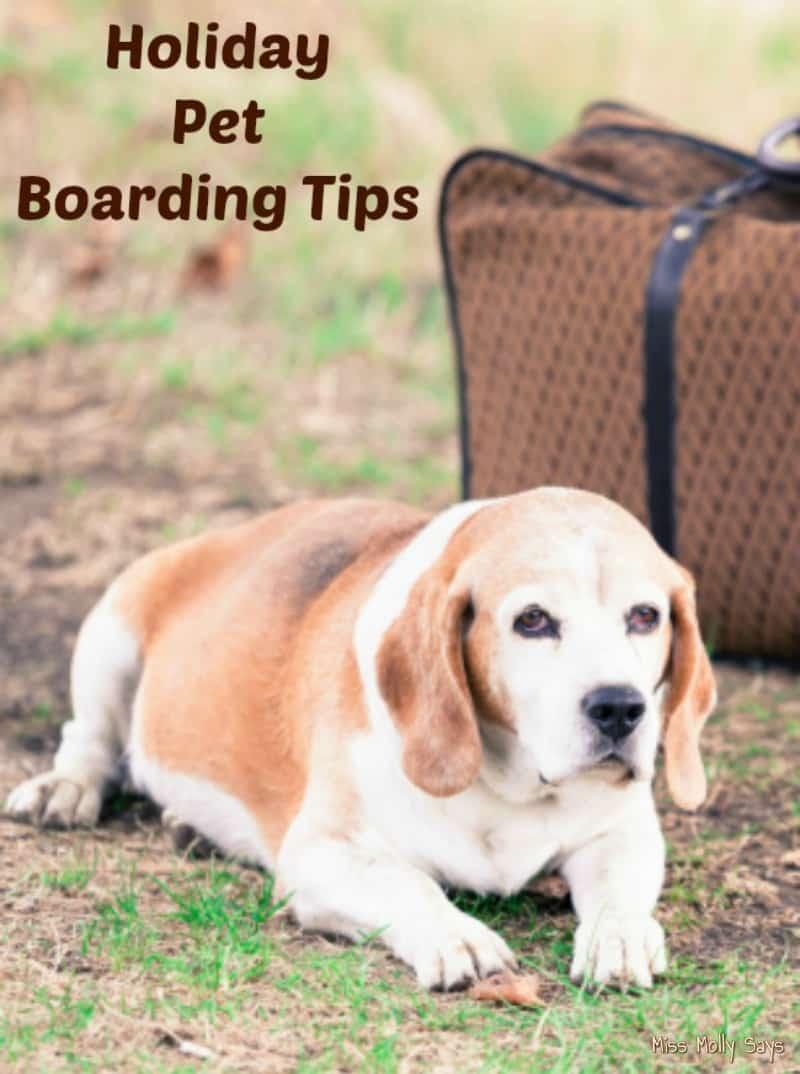 Holiday Pet Boarding Tips