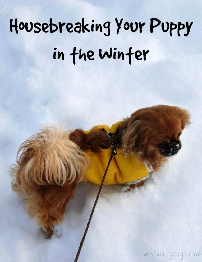 Housebreaking Your Puppy in the Winter