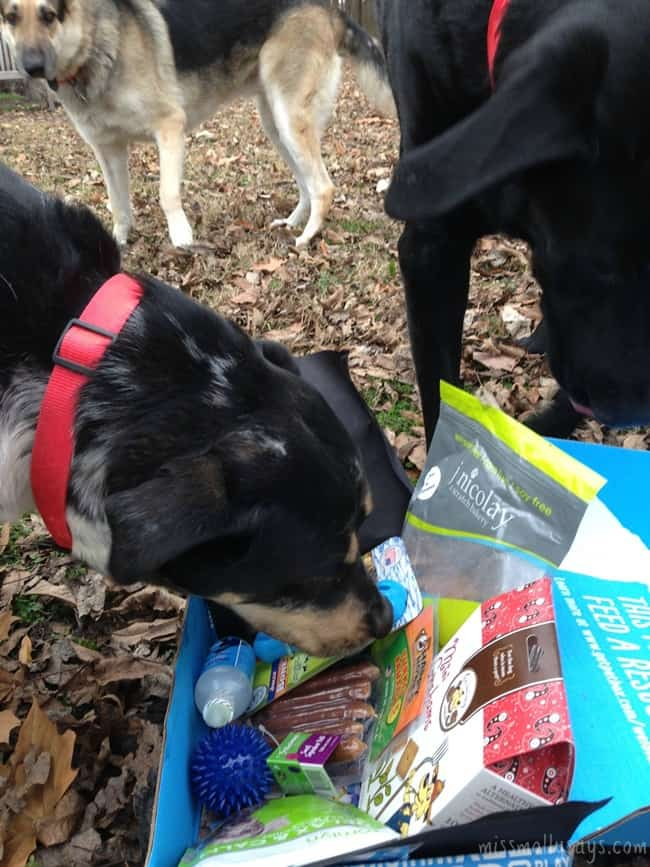 PetBox-November-Seager-Ozzy-Maggie