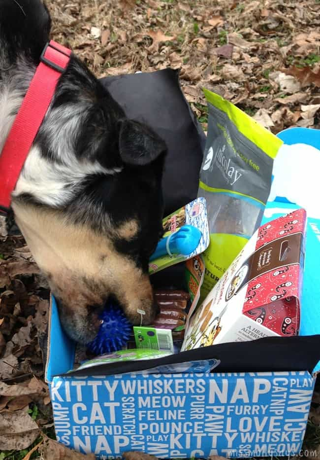 November PetBox was Loaded with Woofalicious Dog Treats and Fun Toys!