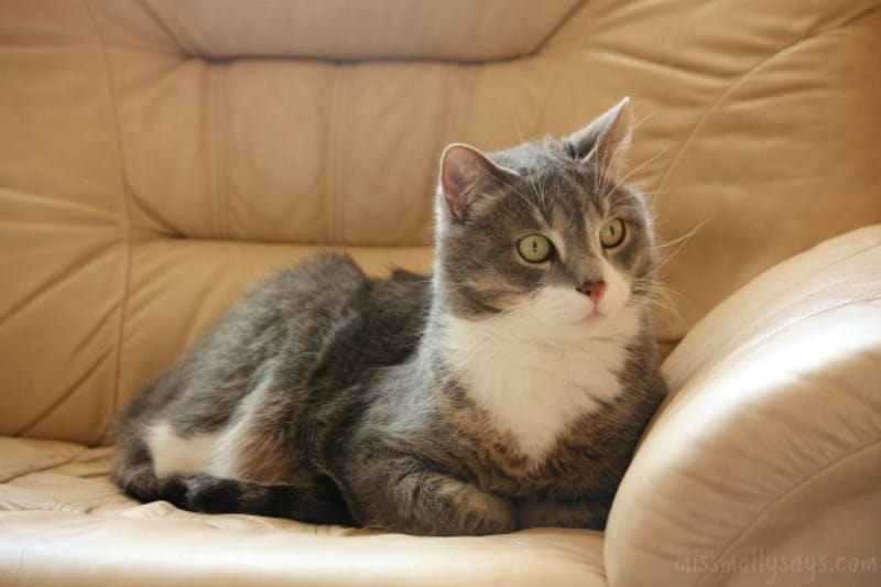 Questions to Consider before Adopting a Cat