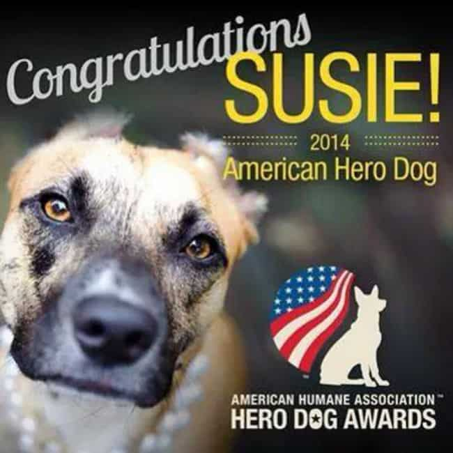 Susie-2014-Hero-Dog-Awards