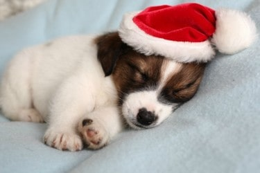 What-to-do-(and-not-do)-for-Holiday-Pet-Adoption