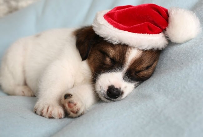 What to do (and not do) for Holiday Pet Adoption