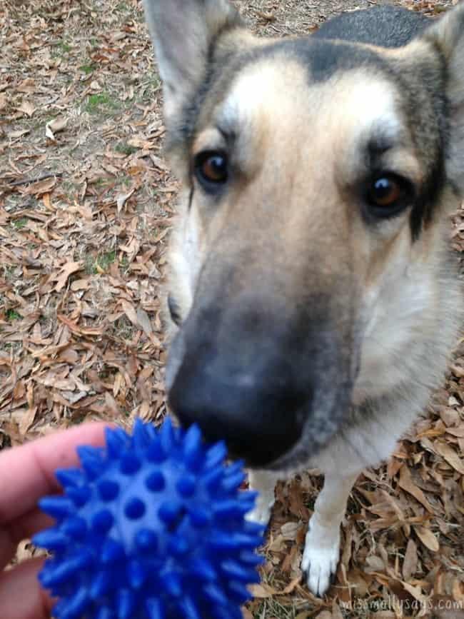 Petbox-gnawsome-squeaker-ball