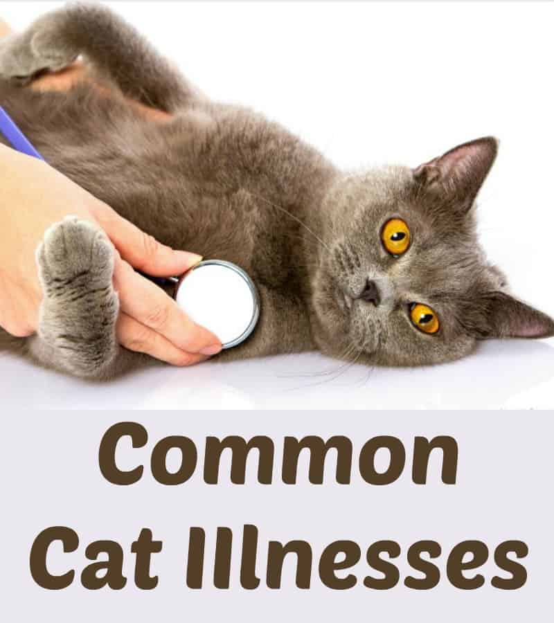 Common Cat Illnesses