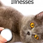 Common-Cat-Illnesses-banner