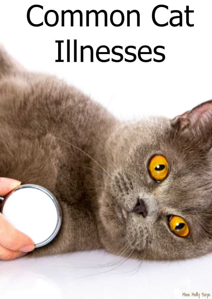 Common Cat Illnesses Miss Molly Says
