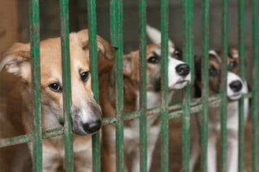 Help Animals in Need, Ways to Donate to Your Local Shelter