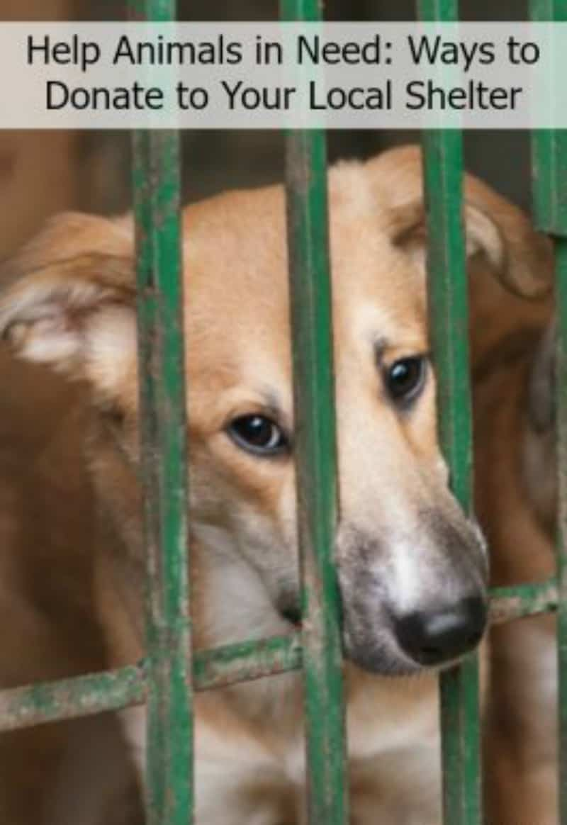 Help Animals In Need Ways To Donate To Your Local Shelter