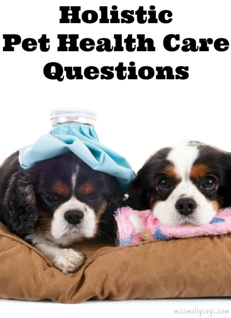 Holistic Pet Health Care Questions