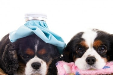 Holistic-Pet-Health-Care-Questions-vertical