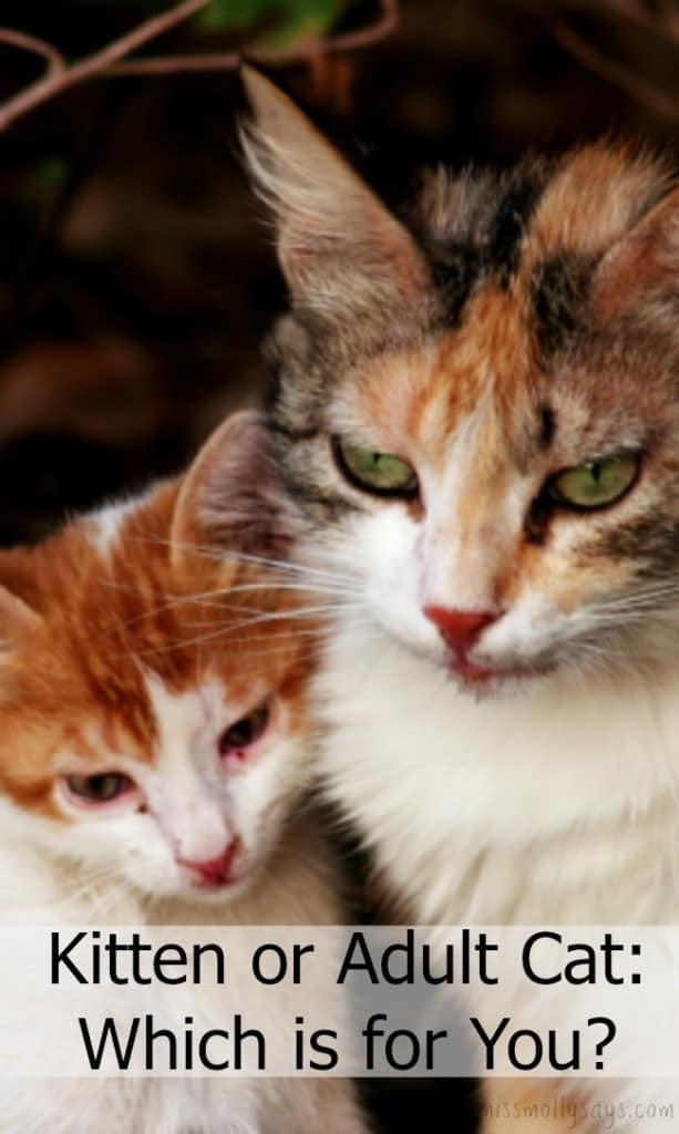 Kitten or Adult Cat: Which is for You?