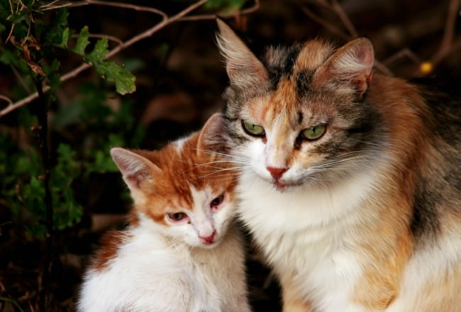 Kitten-or-Adult-Cat-Which-is-for-You