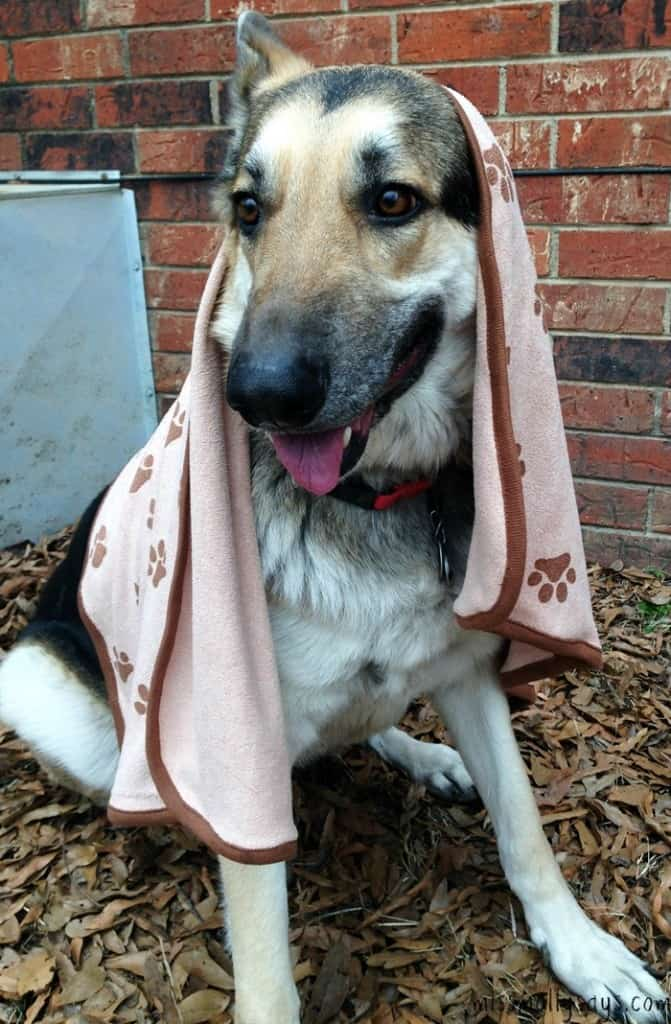 Luv-&-Emma's-Dry-Pets-Microfiber-Towel