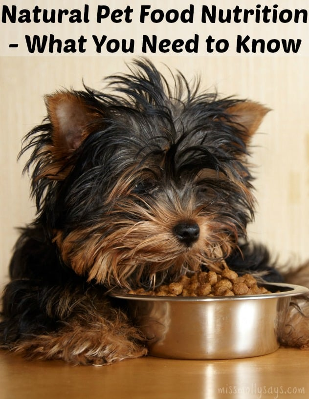 Natural Pet Food Nutrition – What You Need to Know