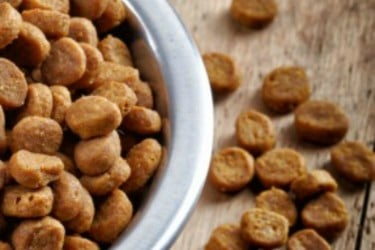 Organic Dog Food Brands – Best for Health