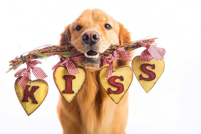 kiss-Happy-Hearts-dog-collar