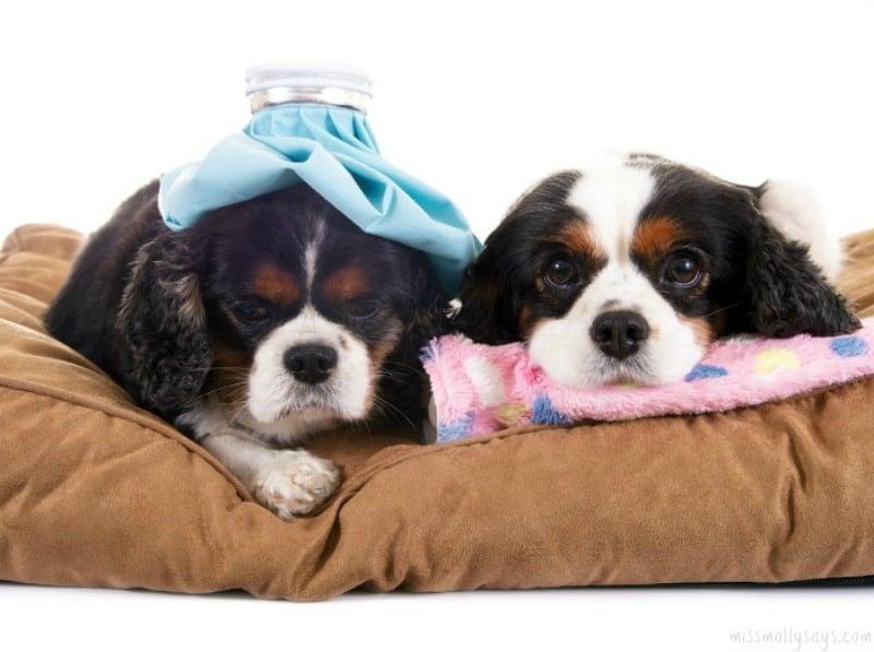 Holistic Pet Health Care Questions