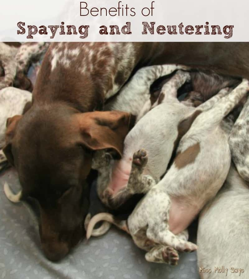 Benefits-of-Spaying-and-Neutering banner
