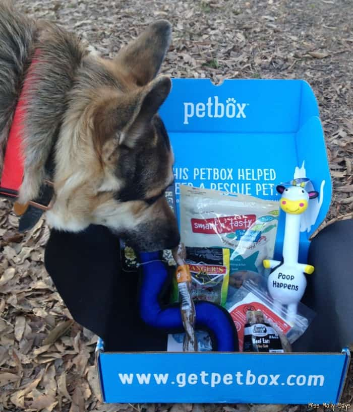 January PetBox Review: Woofalicious Dog Treats and Pawsome Toys!