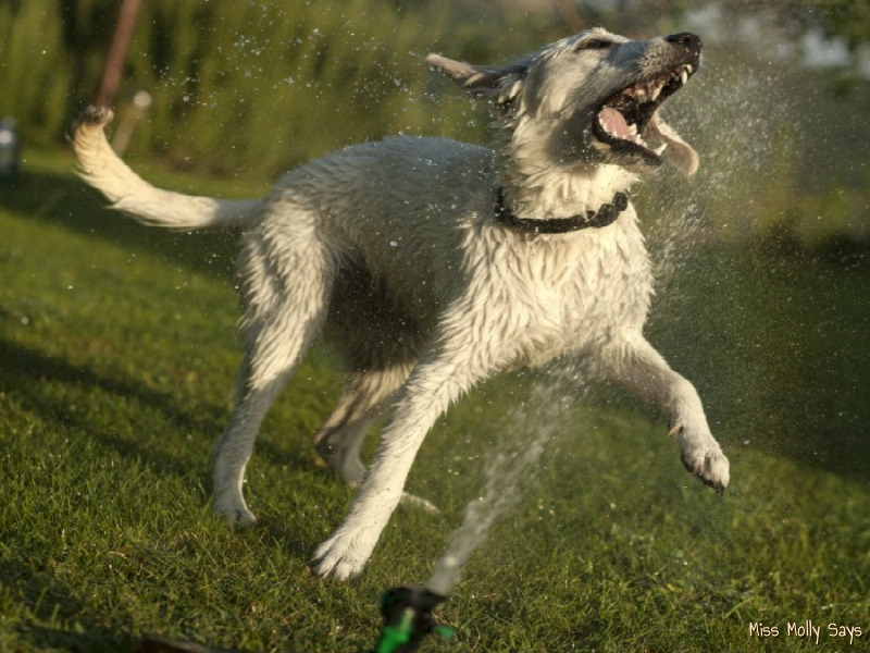 10 Ways to Keep Pets Cool this Summer
