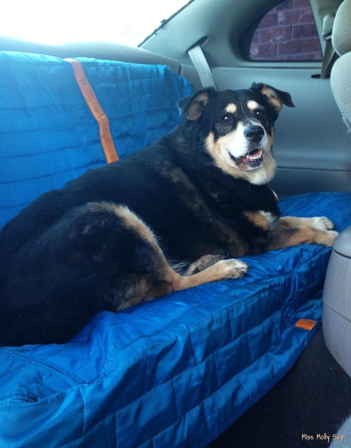 kurgo loft bench seat cover because dirty dogs are happy dogs review petpalooza miss molly says. Black Bedroom Furniture Sets. Home Design Ideas