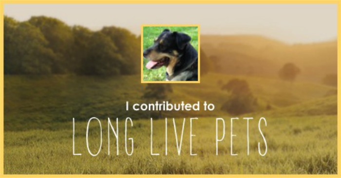 I contributed to Long Live Pets - Seager's banner