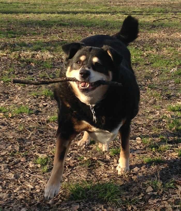 Rejeneril Cellular Supplement for Pets - Sallie playing fetch