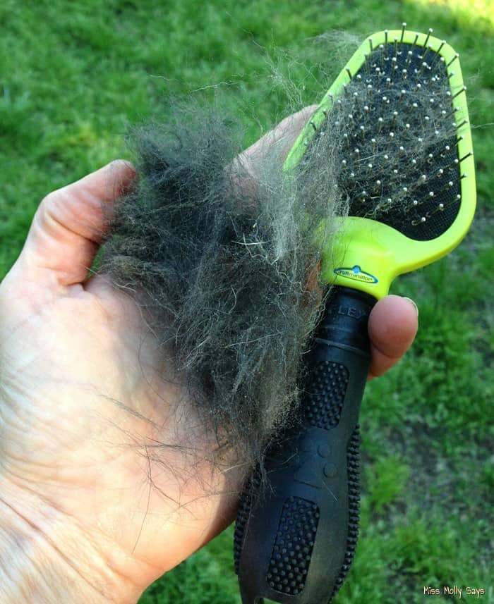 FURminator Dual Brush for a Well Groomed Happy Dog! #Review