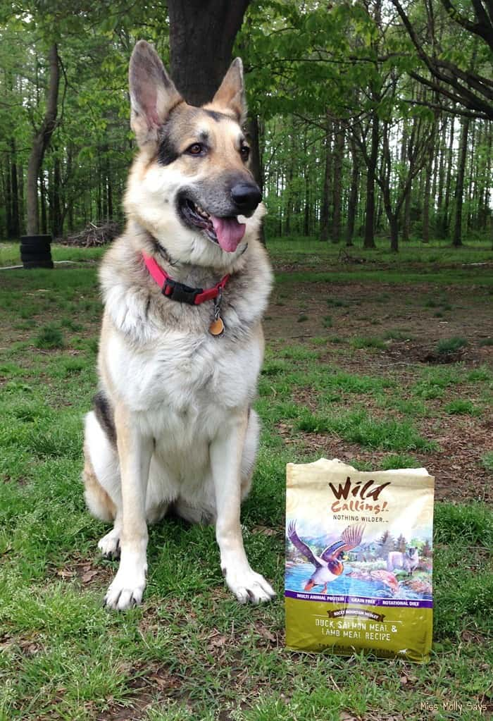 All Natural Nutrition with Wild Calling! Dog Food #TheArtofNutrition - Maggie