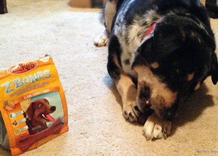 Zuke's Z-Bones Grain Free Dental Chews for Dogs #Review - Seager