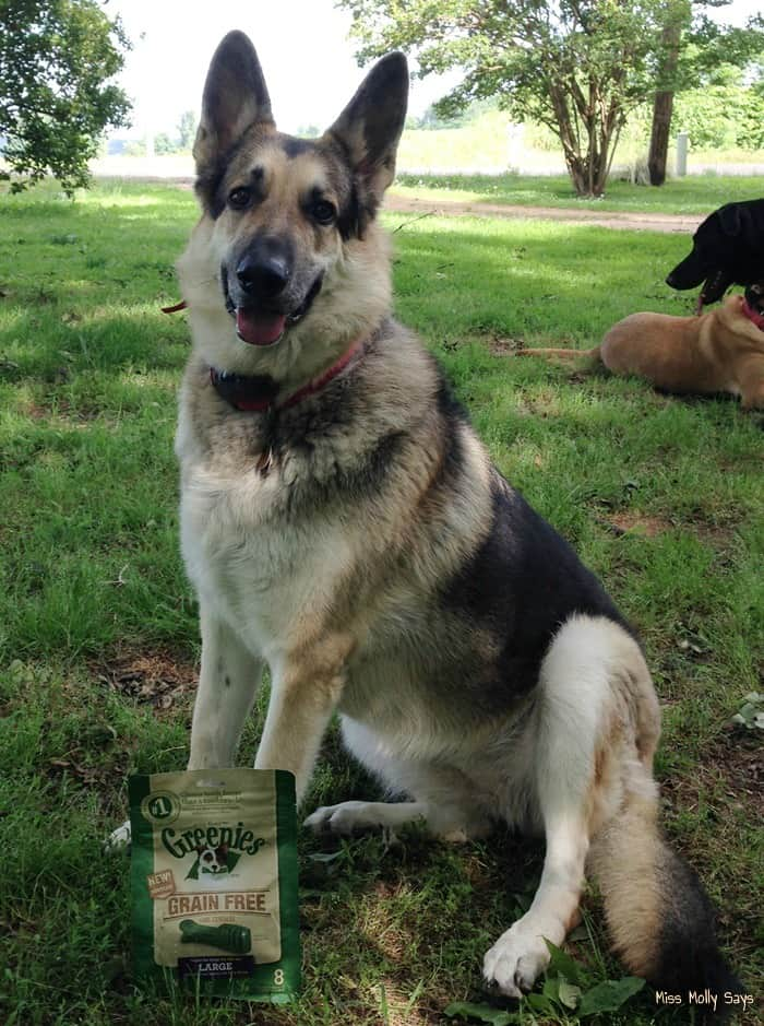 Greenies Grain-Free Dental Dog Treats for Healthy Teeth & Gums #Review