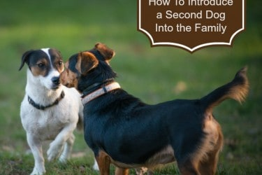 How To Introduce A Second Dog Into the Family