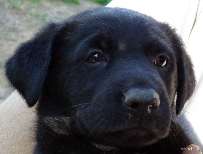 Ozzy, New Puppy Care & Advice Resource from Purina #MyPuppyhood