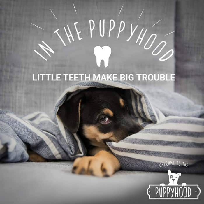 In the Puppyhood, New Puppy Care & Advice Resource from Purina #MyPuppyhood