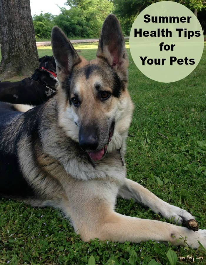 Summer Health Tips For Your Pets